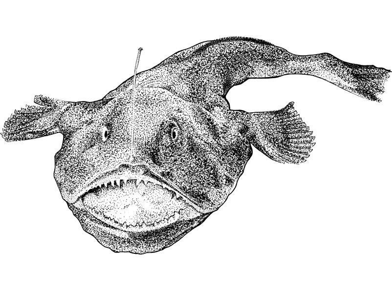 http://phillustrator.co.uk/files/gimgs/22_monkfish-black-web.png